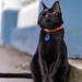 cat portrait / Reykjavik
