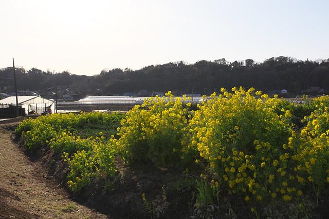 Higashimatano#8
