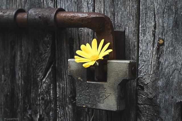OPEN YOUR  DOOR WITH A  FLOWER