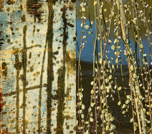 Abstract diptych of used concrete form in yellowy-greens and grey combined with soft yellow catkins on a pussy willow beside a dark green pond