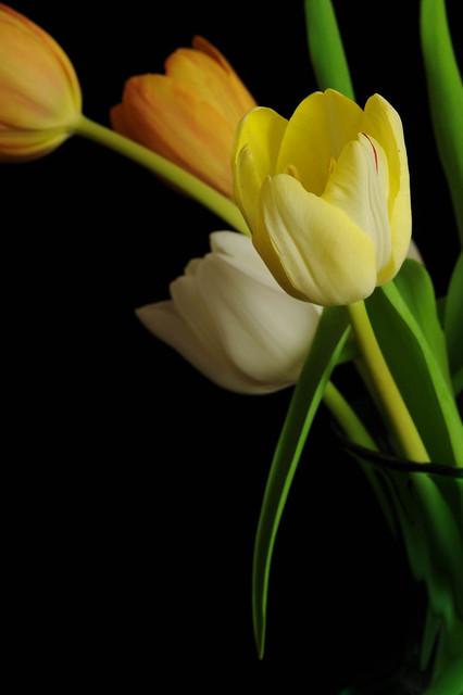 Flowers 30