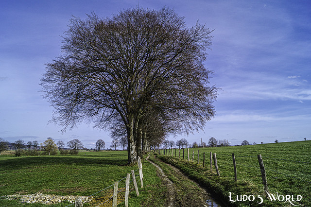 Jevigné, Lierneux (04)