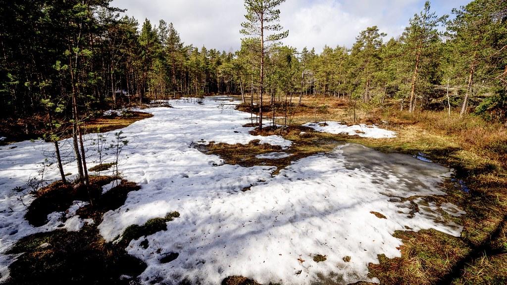 Västersundom swamp, East-Helsinki 🌴