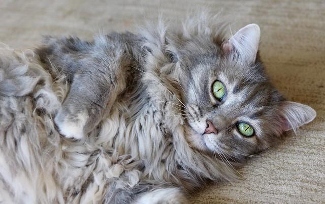 So much fur!