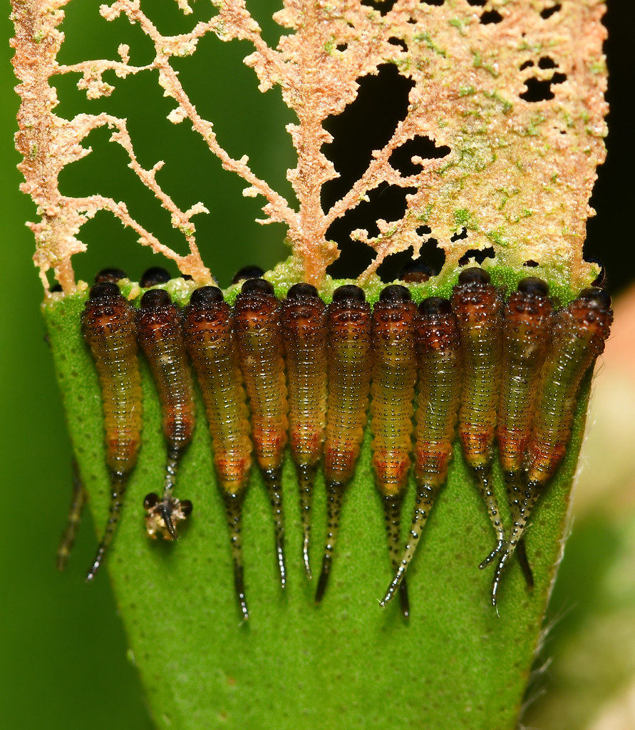 Larvae lunch line up