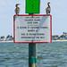 Caladesi Cormorants