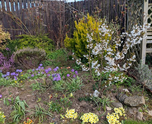 Flowers, my garden