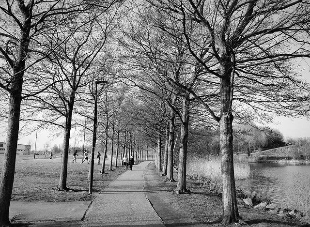 Tree lined walk, Lakeside, Doncaster