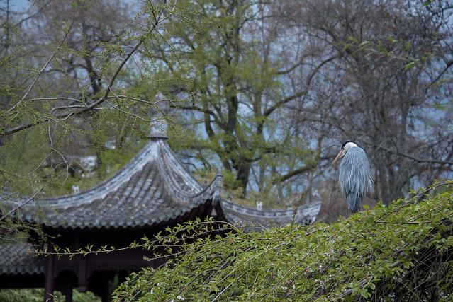 Der König vom Chinesischen Garten-bw_20210411_3844.jpg