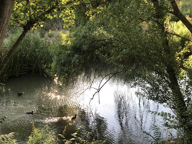 Río Manzanares a su paso por El Pardo