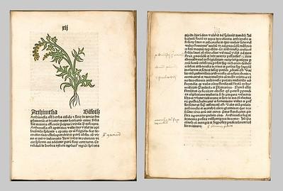 Herbarius-moguntinus