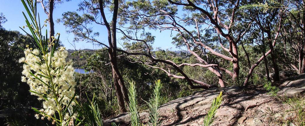 Bushland panorama