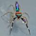 Chrysalis spider
