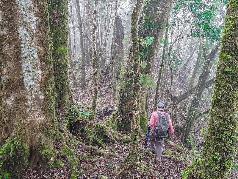 加奈鹿山主稜線 (3)