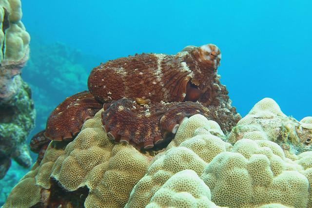 squatting octopus  -  Explored April 21, 2021