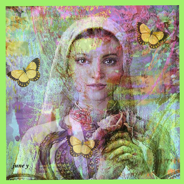 Three Yellow Butterflies...