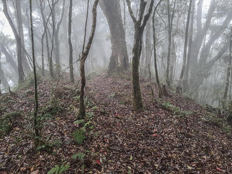 加奈鹿山主稜線 (2)