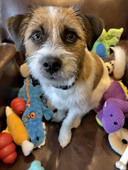Cosmo and His Toys.