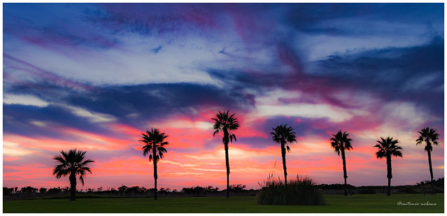 Atardecer en rojo, purpura y azul con  palmeras // Sunset in red, purple and blue with palm trees (EXPLORE 14/04/2021)