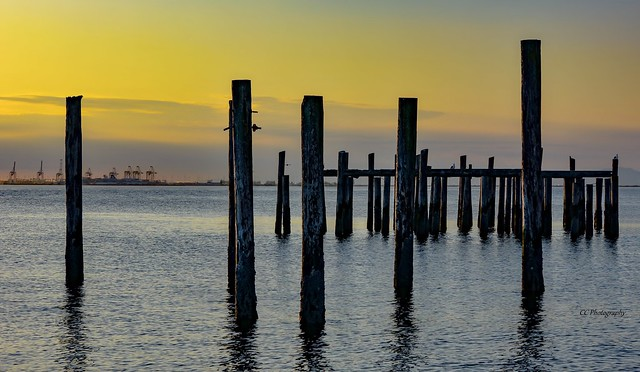 Historic  Piles ** Point Roberts ** Whatcom County, USA