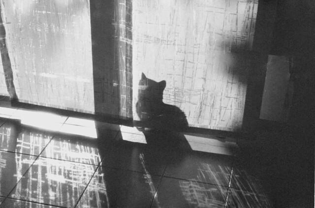Ombre feline