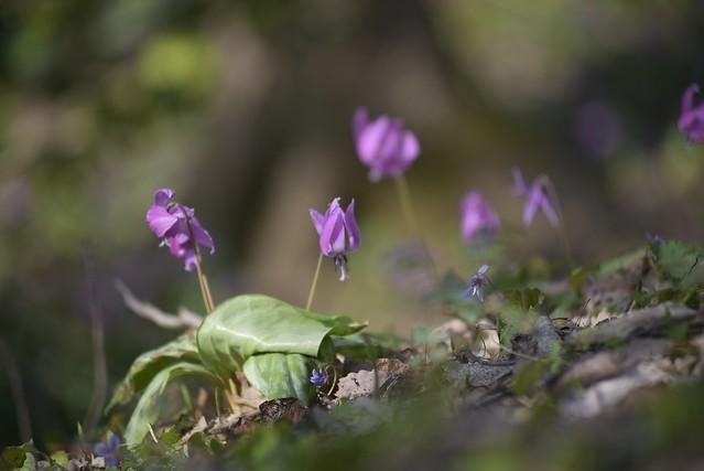 Spring Time 17