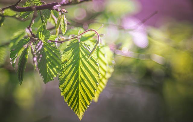 Spring green
