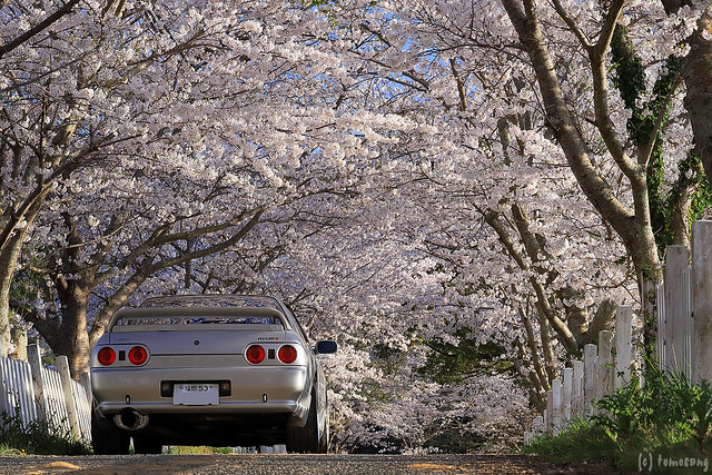 R32 in Sakura