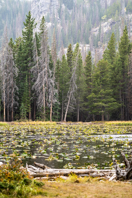 Nymph Lake in Rocky Mountain National Park during fall. Lilypads on the lake on misty day