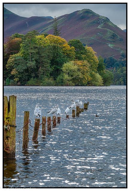 Across Derwent Water to Catbells, Cumbria.