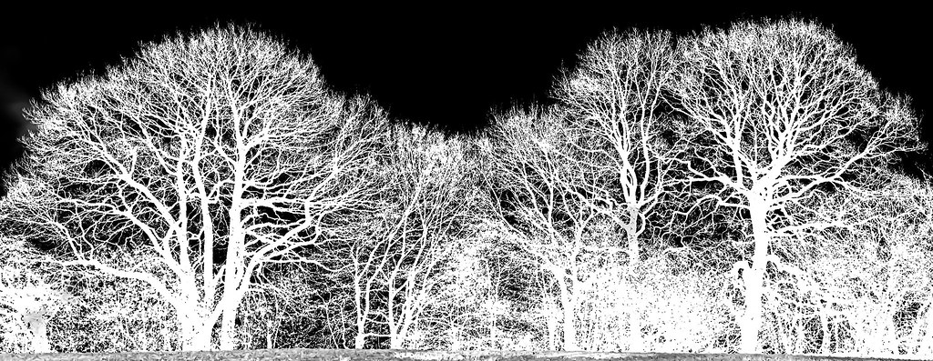 Tree Negative Silhouette