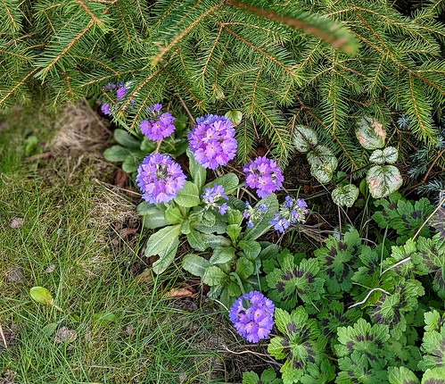 Flowers , my garden