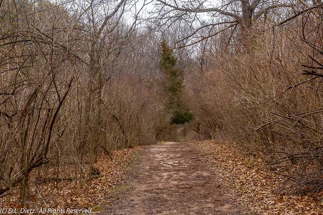 Path Through Woods #2 - 2020-04-04