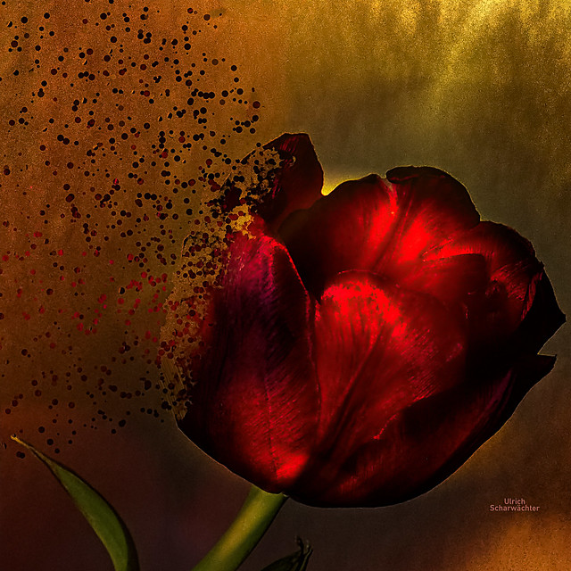 E234 Flower