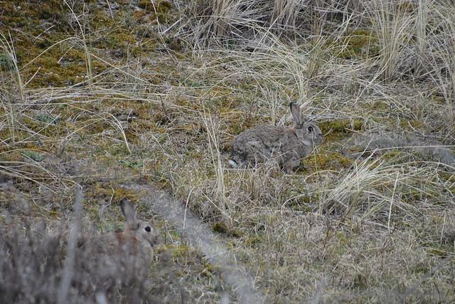 zoek de konijnen