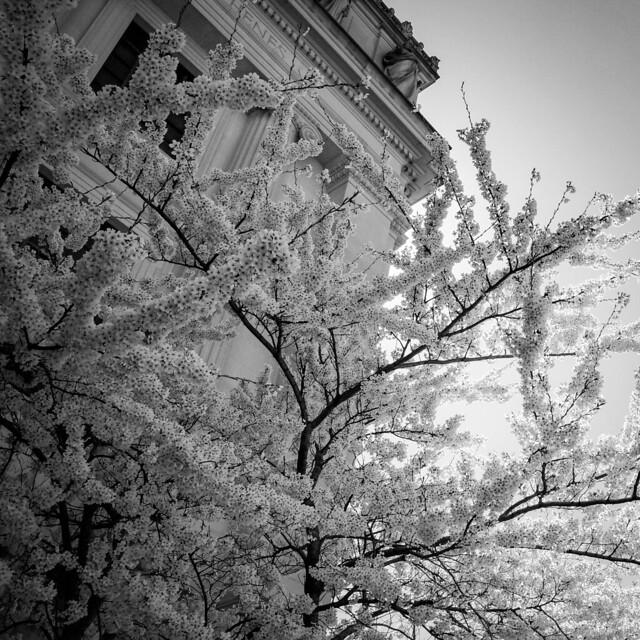 Brooklyn Museum, Brooklyn, NY - 04.13.21