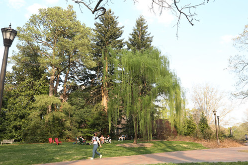 Spring Break Day 5 was perfect for a student mini-fest in the Crim Dell Meadow.