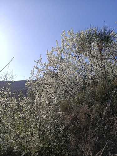 Torrelles en primavera