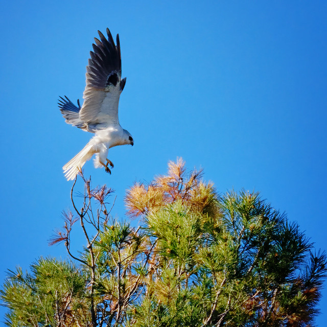 Landing on a treetop