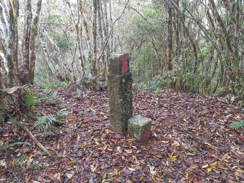 加奈典山編號1663號二等三角點和冠字主沖(03)山字森林三角點