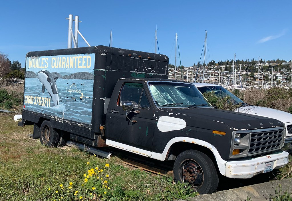 """2021-04-14 """"whales guaranteed"""" truck"""