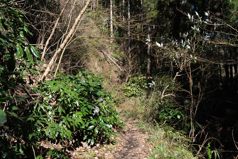 森戸川林道