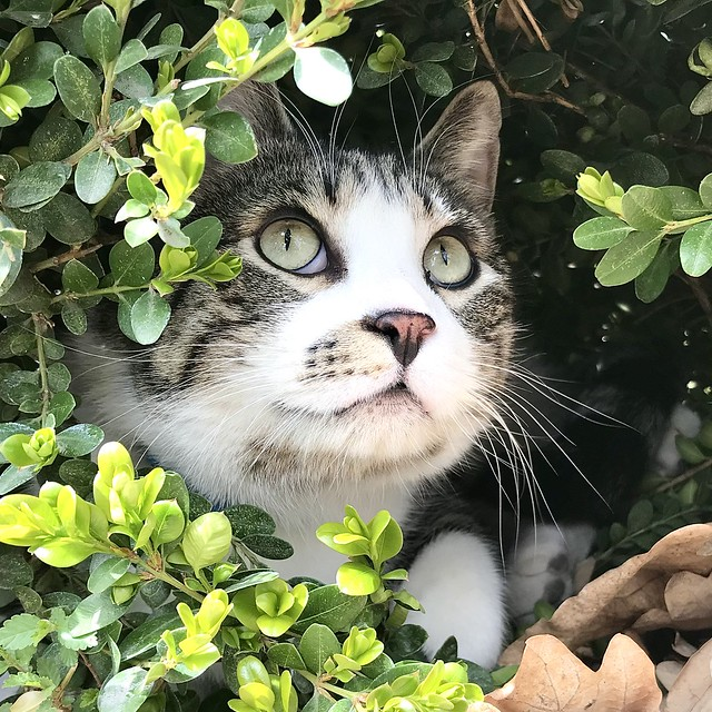 Cat in the Plant
