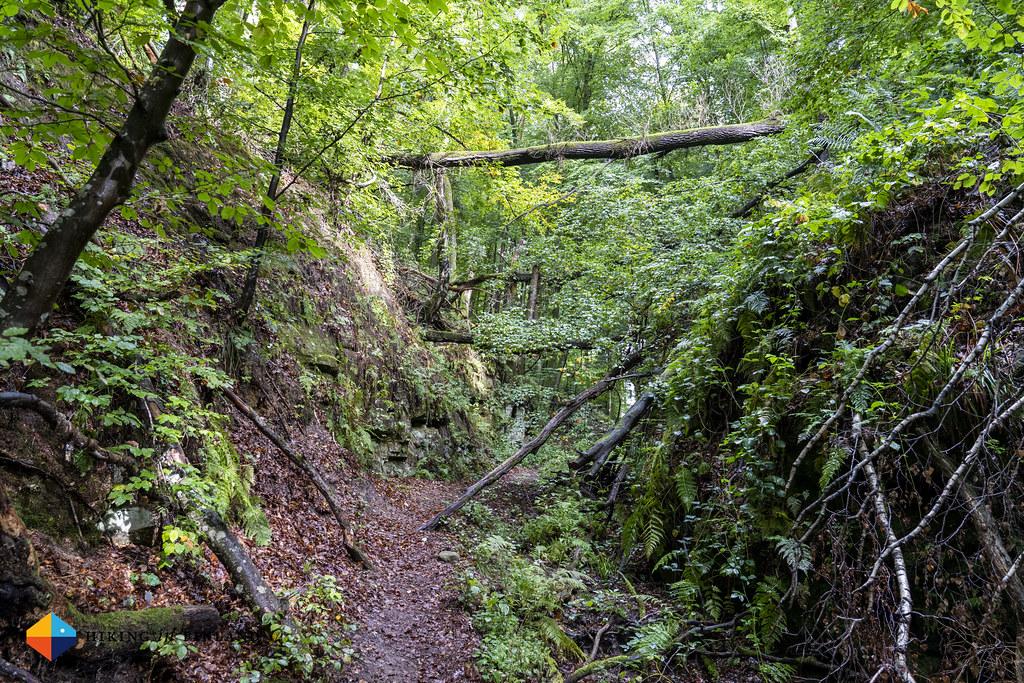 Path down to Blumenthal