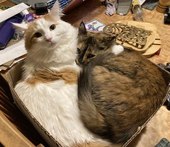 Two cats crammed into a box
