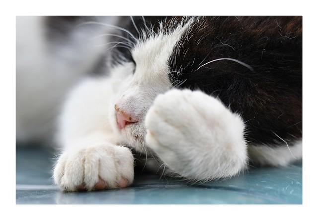 Es una labor muy dificil ganarse el afecto de un gato.