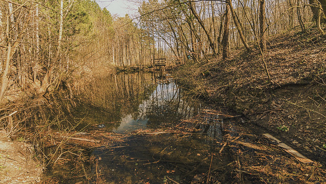 The small pond in the forest