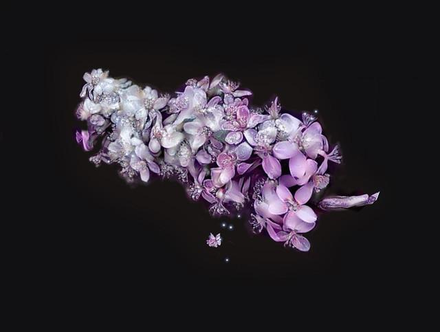 Lovely in lavender....