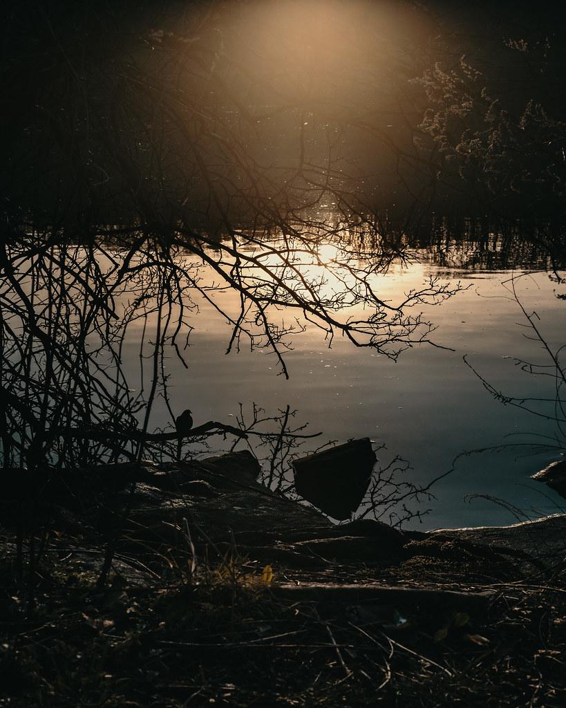 Mourning Dove at Muscota Marsh