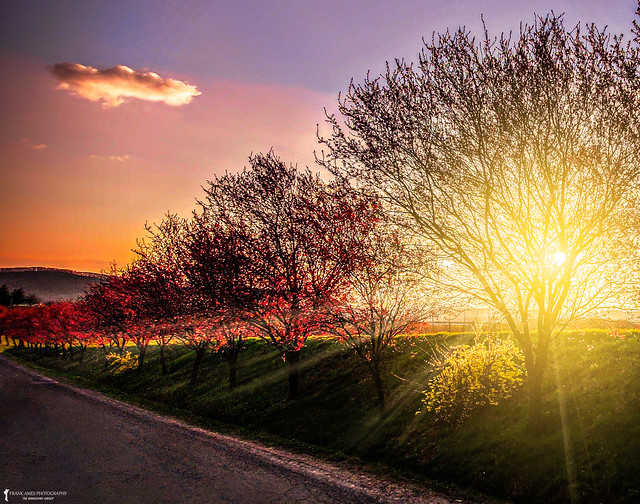 Blossoming Sunset